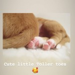 Toller Toes!