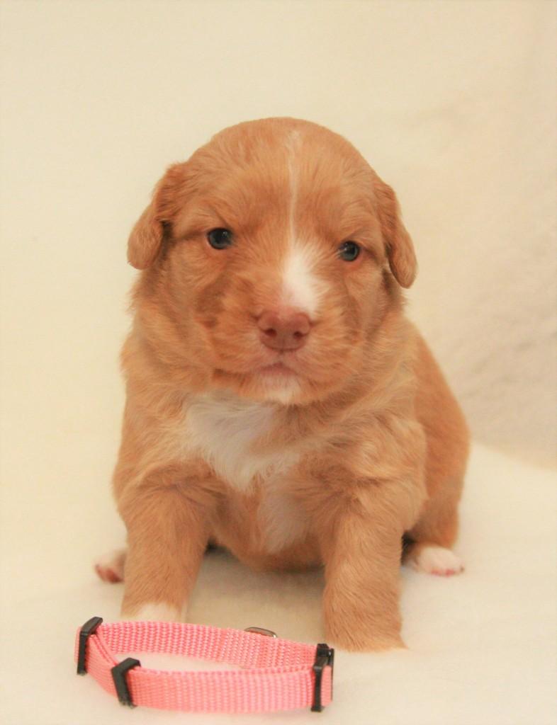 Miss Pink 2,5 Weeks old