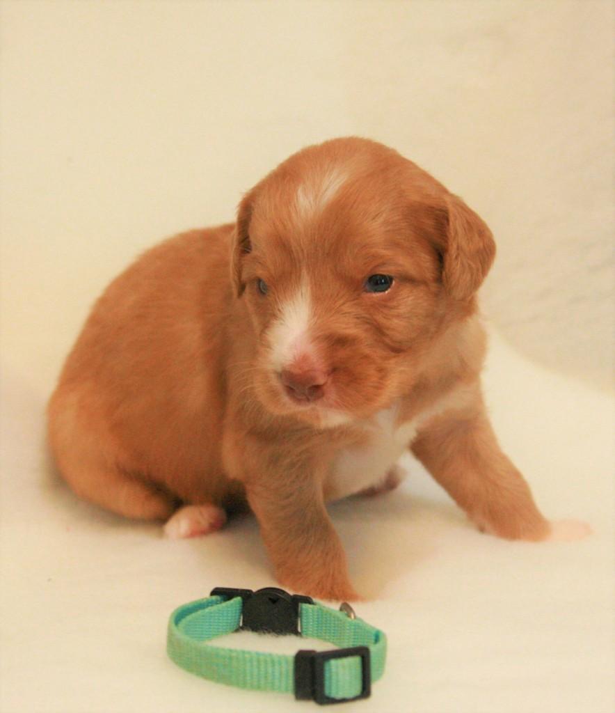 Mr. Teal 2,5 Weeks old